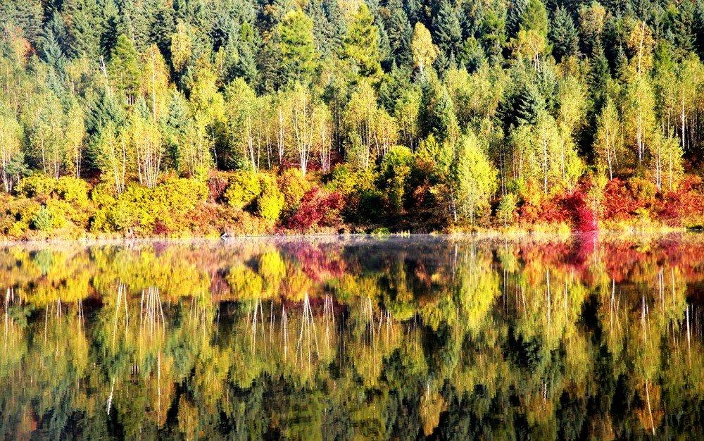伊春的森林里,五彩斑斓的秋韵之美