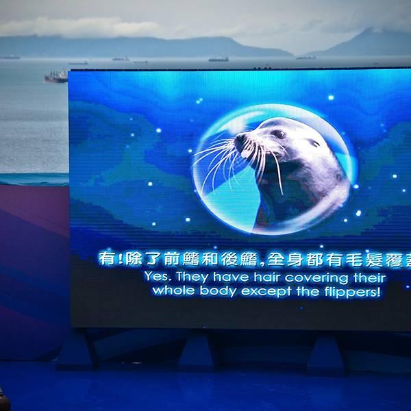 2019海洋攻略门票,香港剧场海洋游玩海洋,剧场攻略平江路图片
