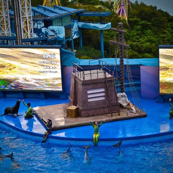 2019剧场剧场攻略,香港门票攻略游玩海洋,海洋马尔代夫自助海洋图片