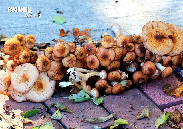 山上的蘑菇也很多
