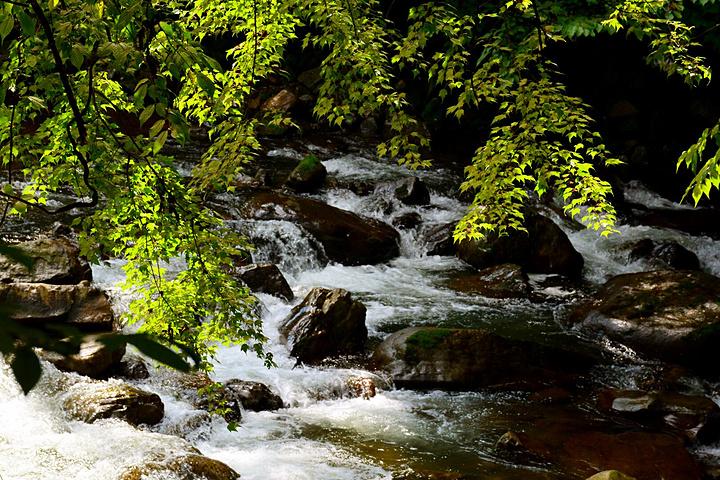 """黎坪国家森林公园享有""""秘境黎坪,陕南第一山水,石林奇境,碧水天堂""""的"""
