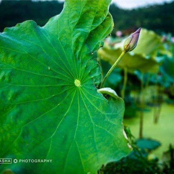 背景 壁纸 花 绿色 绿叶 树叶 植物 桌面 600_600