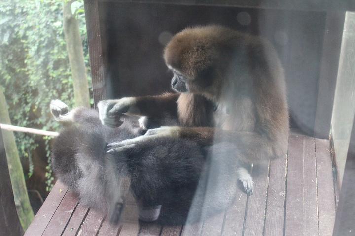 这是隔壁的熊猫妹妹~~他们吃竹子的时候动作非常的娴熟啊~~~作为大天朝的子民我也不知道为啥我看到熊猫如此的激动哈哈~可能是因为国内的熊猫都是躺着睡觉不动的关系吧。。。旁边的日本妹子一直在说卡哇伊~~~我想和她们说快去四川看吧!熊猫老家~~哈哈