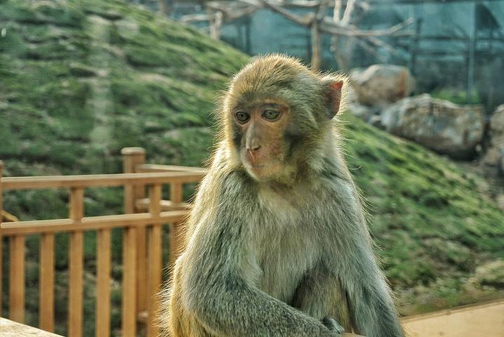 """""""这些活泼可爱的小猴子"""
