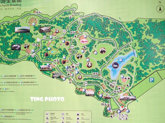 """在景区游览车上_成都大熊猫繁育研究基地""""的评论图片"""