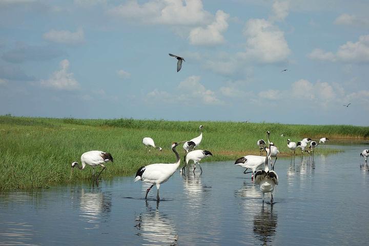 """""""扎龙湿地是中国 最大的国家级自然保护区,世界最大的芦苇湿地.图片"""
