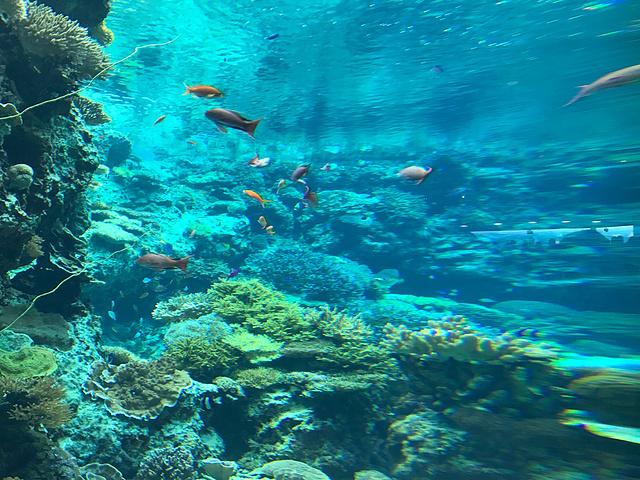 世界第三的海洋馆,各种浅海和深海动物一览无遗,值得一去的地方.
