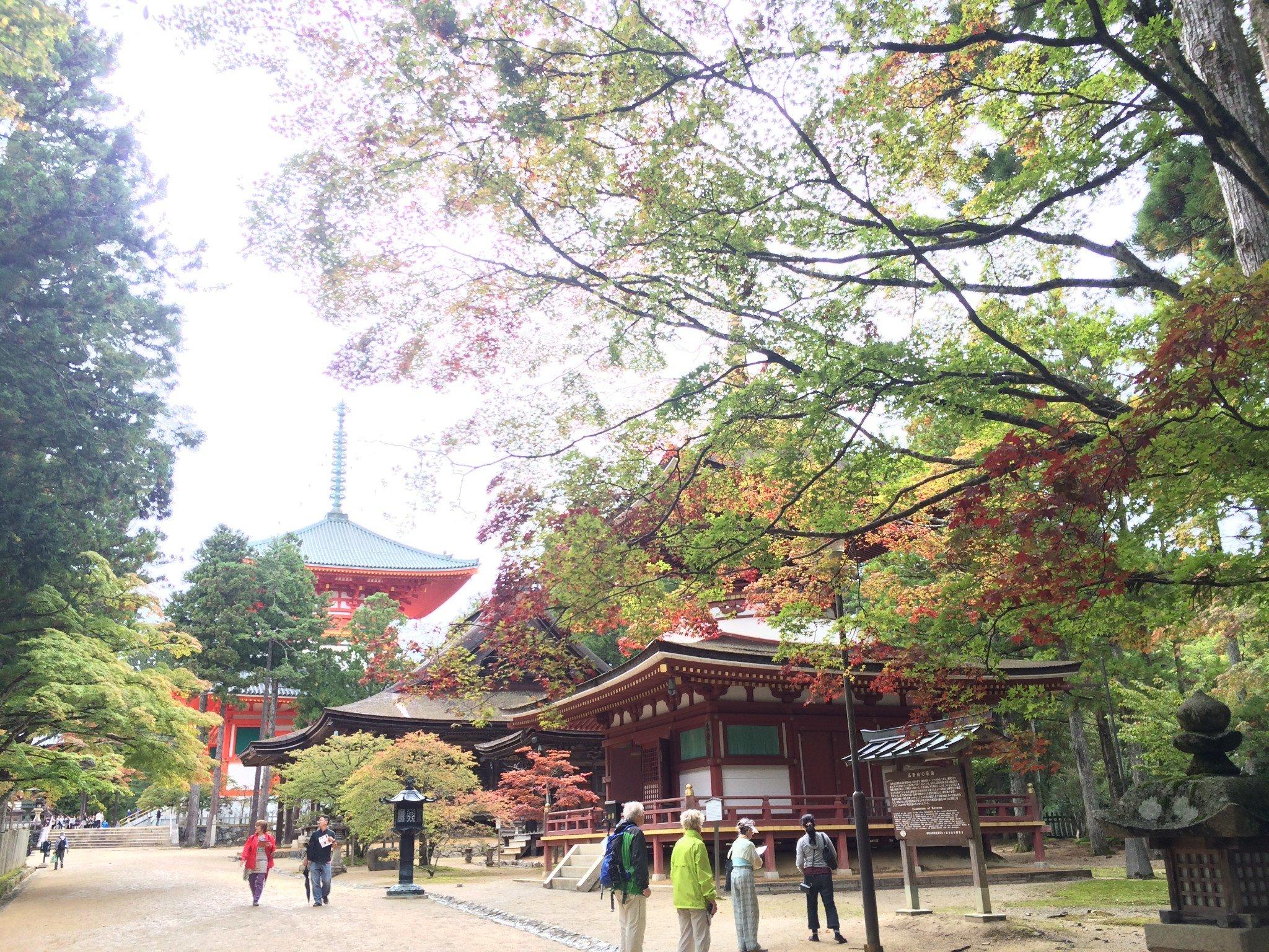 同样的日本,不一样的霓虹(京都、大阪、奈良、高野山、比叡山、姬路、宇治)