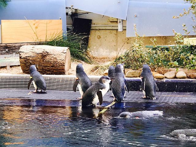 一大群超级可爱的qq啊看到一大群游泳的小企鹅瞬间木有抵抗力啊!