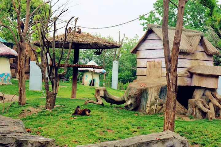 常州的淹城野生动物园位于春秋淹城景区内,这里有很多动物都是散养的