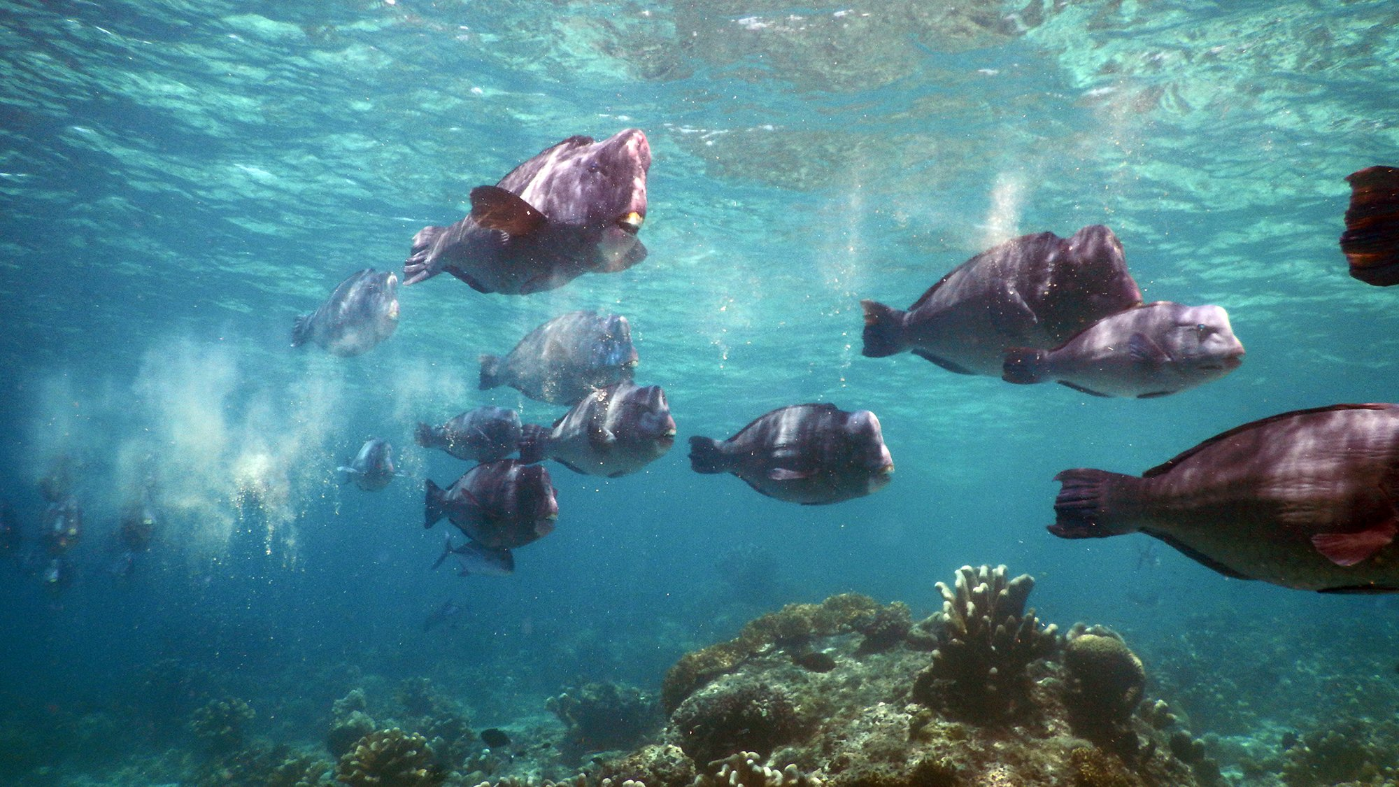 诗巴丹潜水天堂,邂逅鲨鱼、杰克风暴、龟墓、沉船……