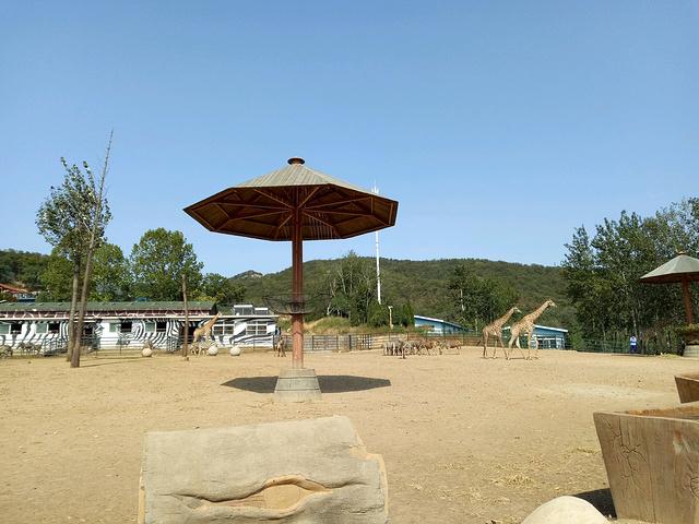"""还有自由行走的羊驼_大连森林动物园""""的评论图片"""