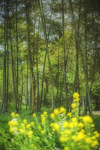 一条竹林里的小径,似乎可以走到另外一个神秘美丽的空间图片