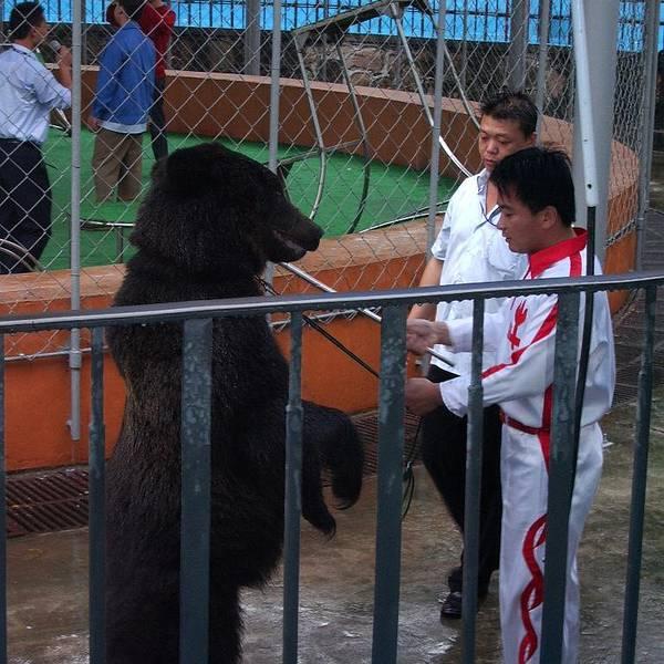 现在去上海野生动物园可以乘坐轨道交通