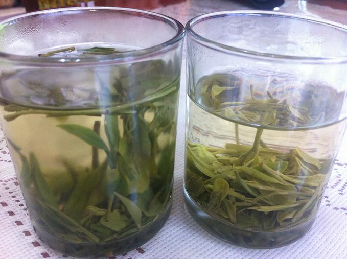 龙井茶图片