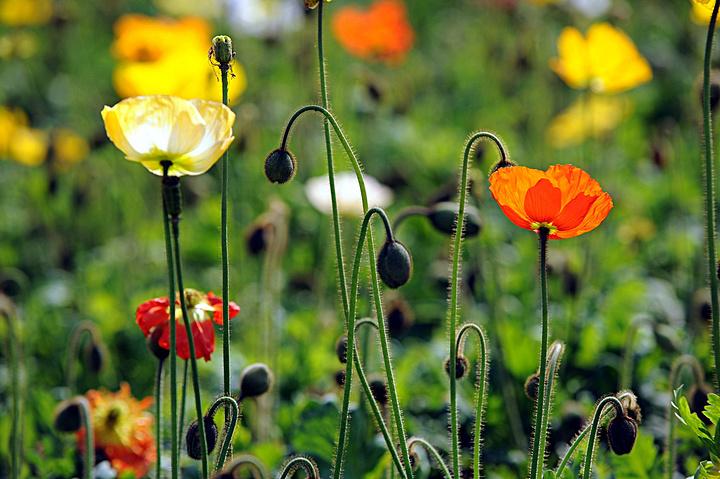 """""""花开正好,如此美景,自然少不了美女们的""""与花斗艳""""啦,但如何才能在"""