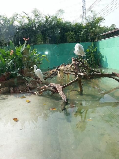 长隆香江野生动物园图片