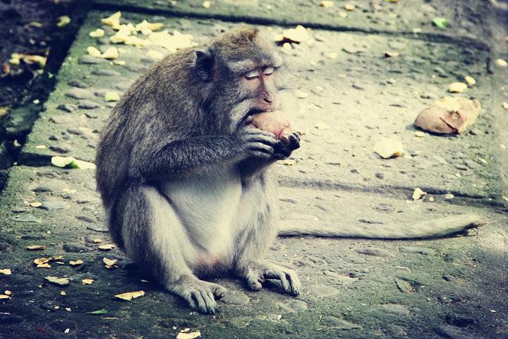 """这只猴子吃东西享受的表情,也是醉了_圣猴森林避难所""""的评论图片"""