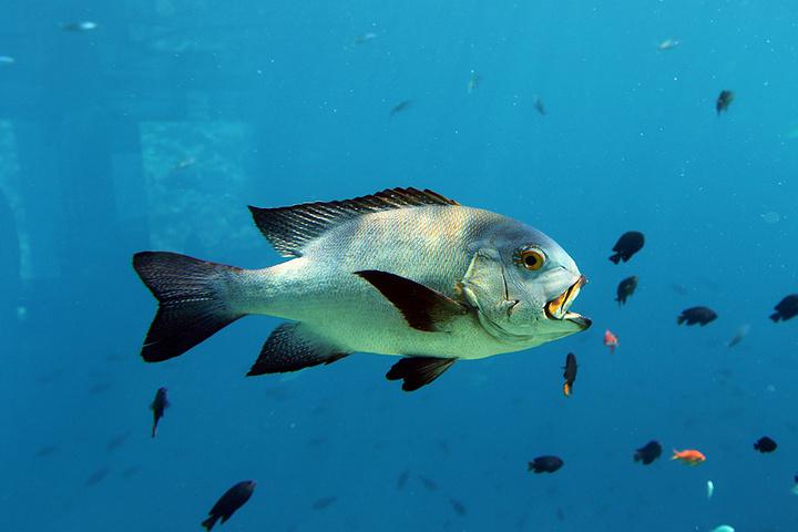 水里游的动物大全图片
