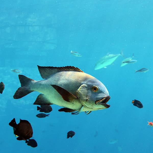 水下动物大全图