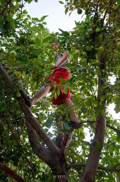 路边苹果树图片