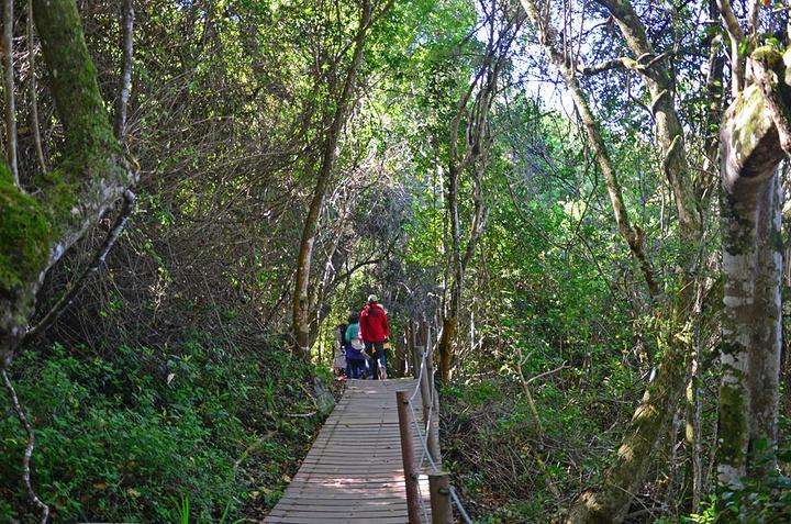 高大的树木和遍地藤条,营造出原始森林的氛围.