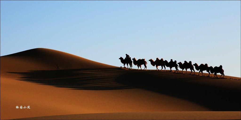 走到沙漠的尽头 秋品额济纳旗胡杨林