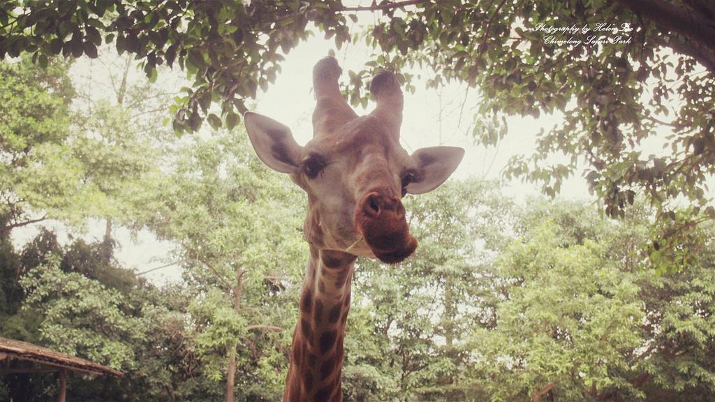 奇妙的一天—长隆野生动物世界