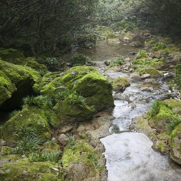 茂兰喀斯特森林图片