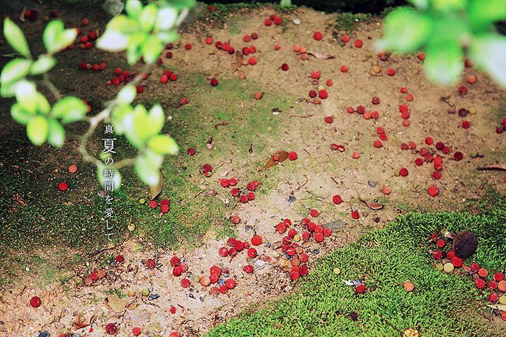 连日来一直是阴雨天,我都在怀疑这次十三天的日本行是不是都会在潮湿的阴雨中度过,可刚想到这儿,金阁寺就露出了蓝天给我欣赏。很巧的是,我们站的地方刚好能看见一枝红色的枫叶,所以当时觉得金阁寺真的好上镜啊~ 关于金阁寺的照片,我并没有放太多,一是大家已经非常熟悉这个地方,看得太多也会视觉疲劳,二是这里真的更适合慢慢散步而不是着急在哪几个点拍几张所谓标准的照片。