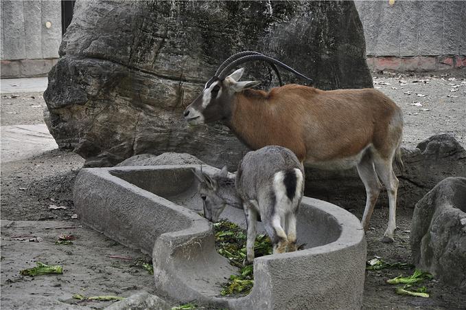 昭觉寺动物园图片