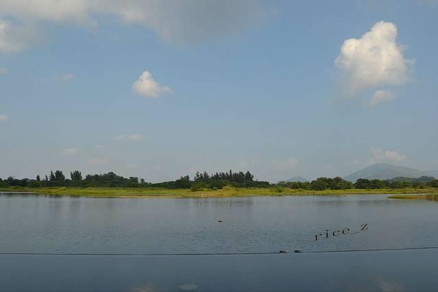 可爱湿地风景图片
