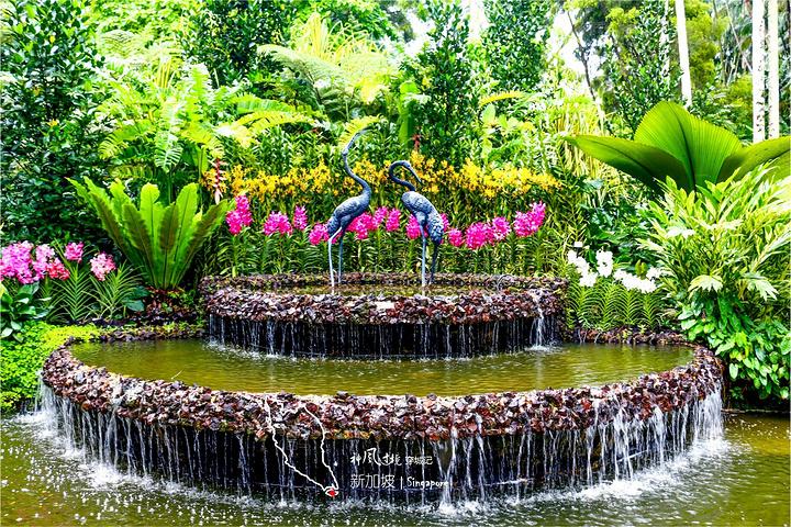 """也许就是从这儿把园林设计方案借鉴出去的吧_新加坡植物园""""的评论图片图片"""