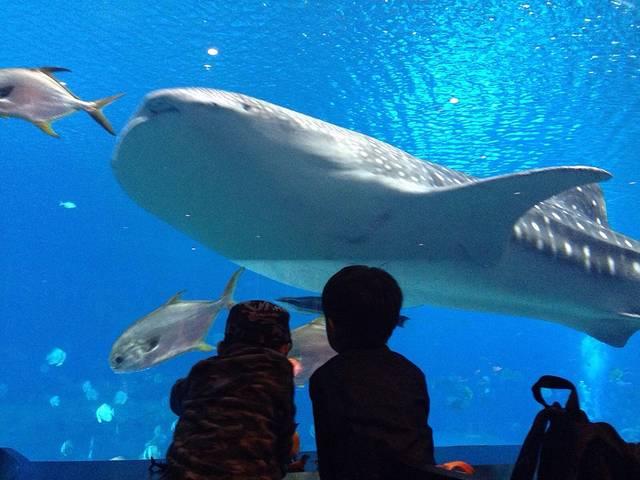 壁纸 动物 海底 海底世界 海洋馆 鲸鱼 水族馆 640_480