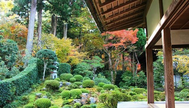 也是青莲院的精华部分,庭院简直像个小公园,一颗颗绿色的植物被修剪的