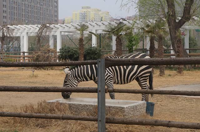 2016郑州动物园_旅游攻略_门票_地址_游记点评,郑州