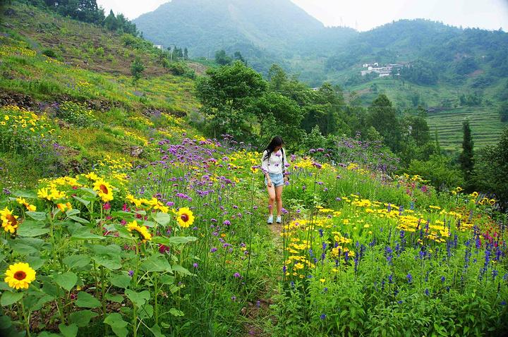 仁吉喜目花谷最美的季节是春天,虽然这次来我们错过了百花盛开的春日