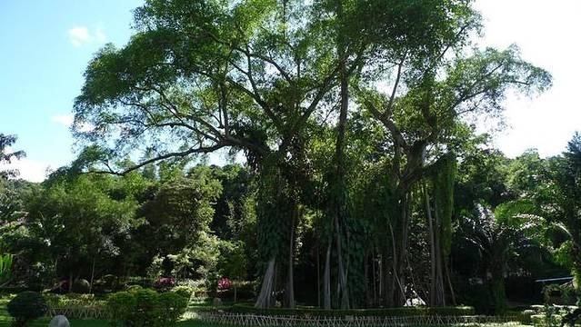 景区的游览景点新增加了佛塔,中缅220界碑,以及唯一一座建在中缅边境