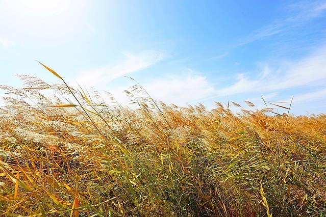 系统】赛罕塔拉公园内具有草地