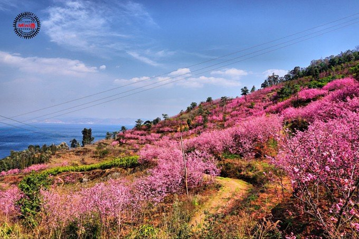 櫻花小道,遠處的山和云朵,讓我感覺誤入仙境.風景不錯.