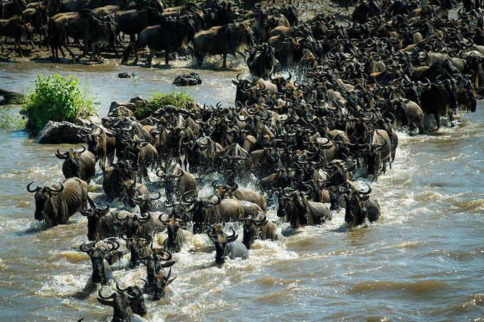 去坦桑尼亚,看非洲大草原最原始的动物世界