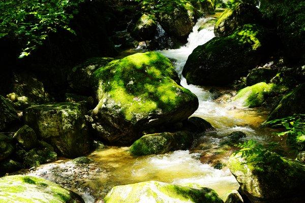 牛背梁国家森林公园图片