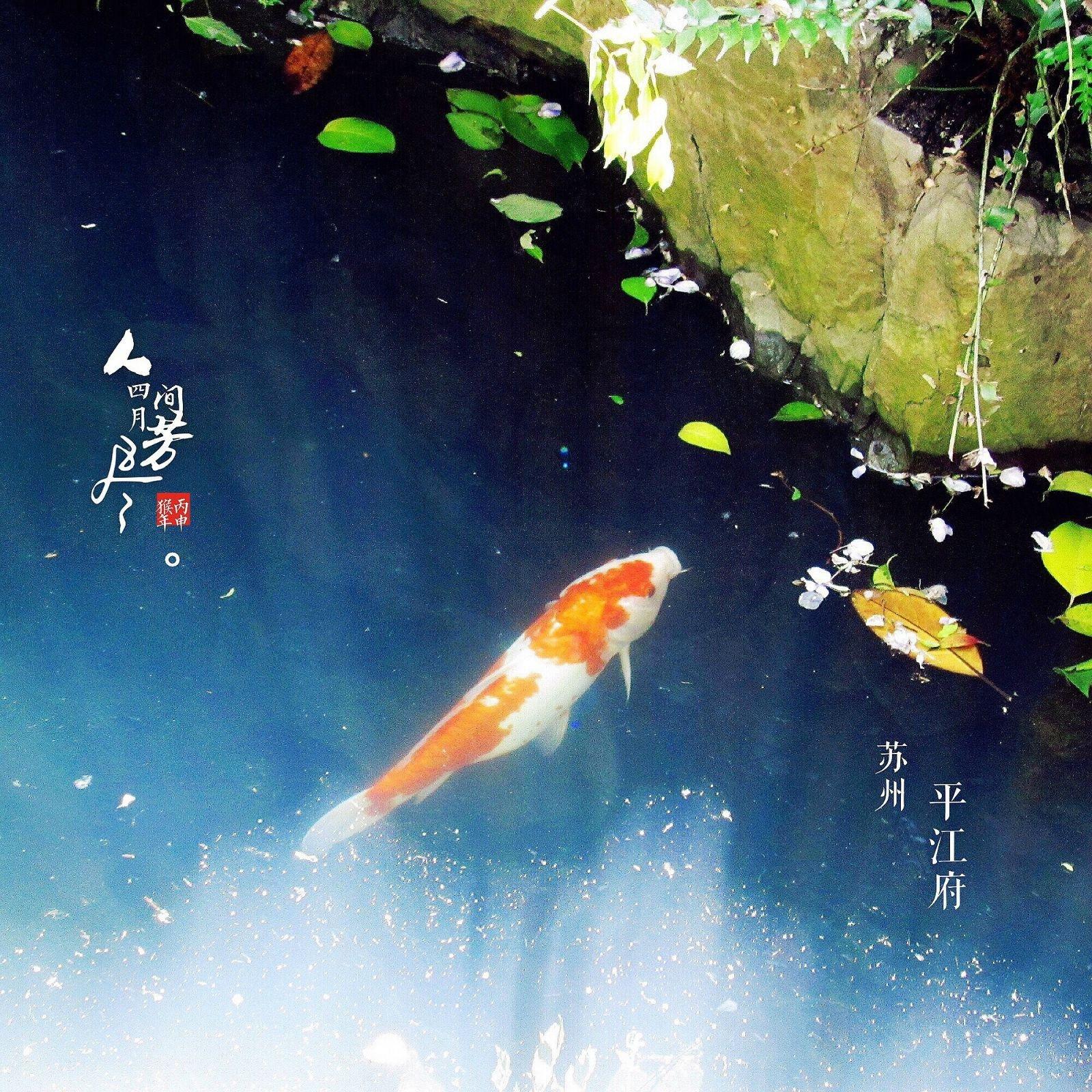 【元宝游记】过个诗情画意的周末——苏州