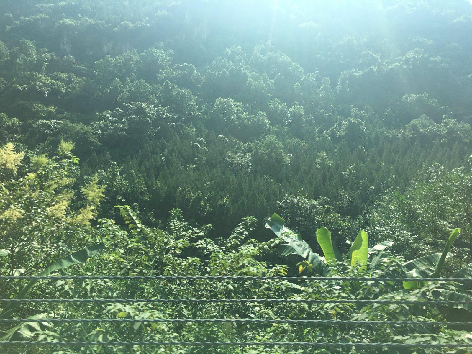 喧嚣纷扰外,让灵魂邂逅这一抹壮美贵州绿!