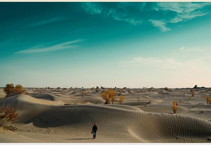 沙漠里的小动物