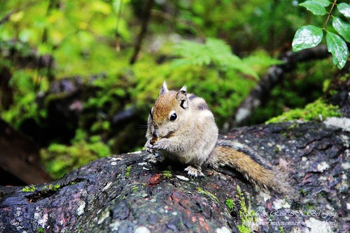 小松鼠和小鸟还一起抢食物吃~~.来来来,拍起来