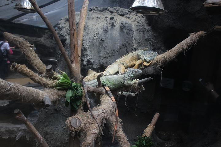 动物园看到最后的一种小动物~~~一.