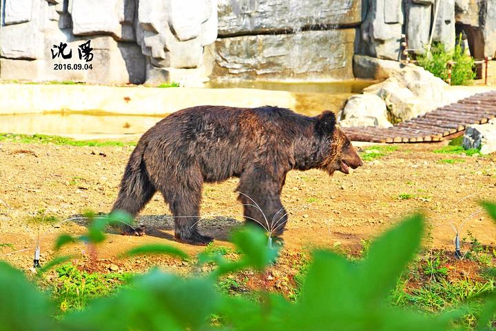 沈阳森林动物园在园林场景设计上具有两大特色.