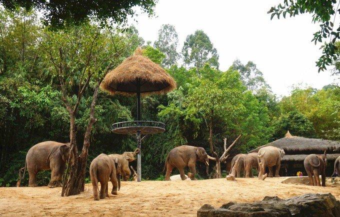 广州长隆野生动物园 一日游~_广州旅游攻略_自助游_去