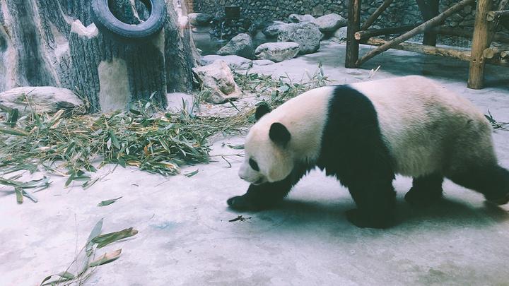梦幻西游新牧场养熊猫_梦幻牧场养什么动物好_梦幻西游牧场养娃娃鱼还是熊猫